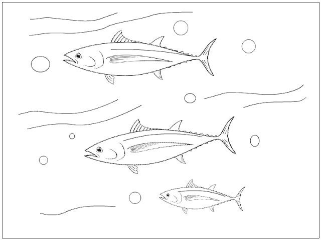 Bigeye Tuna Coloring Page