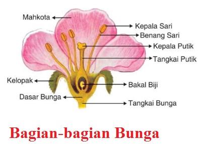 Fungsi Bagian-bagian Bunga pada Tumbuhan