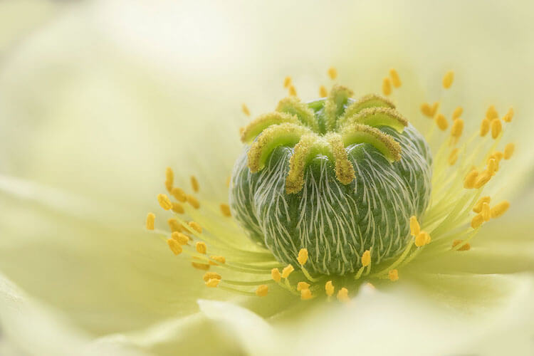 Stunning Pictures Of The International Garden Photographer of the Year 2018 Macro Winners