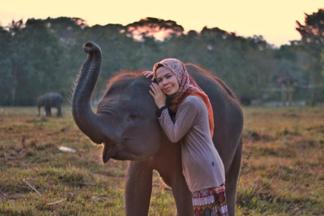 anak gajah di way kambas