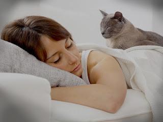 kucing Duduk atau tertidur di dekat kita