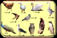 http://www.learningchocolate.com/en-gb/content/birds-1?st_lang=en