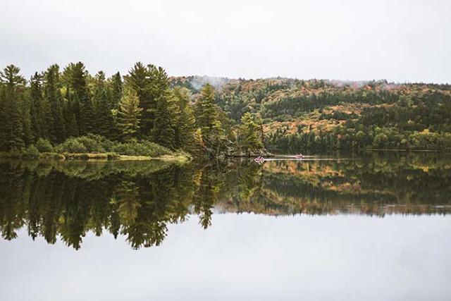 Beautiful Views In Pine wooden