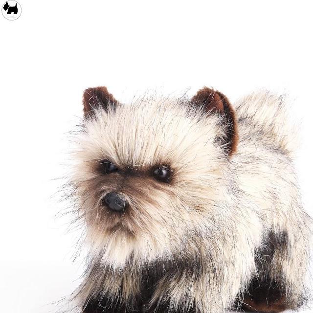 Cutest Dog Breeds, Best Dog, Cairn Terrier Dog puppies