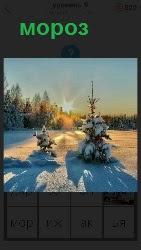 в морозное утро светит солнце и елка стоит в снегу