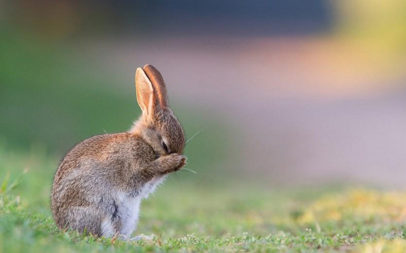 anime Foto dan gambar imut kelinci lucu lucu ternak kelinci hias kelinci hias kelinci merawat kelinci