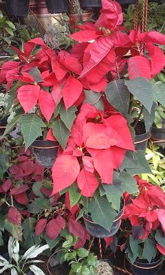 http://www.irzi-taman.com/search?q=pohon+kastuba