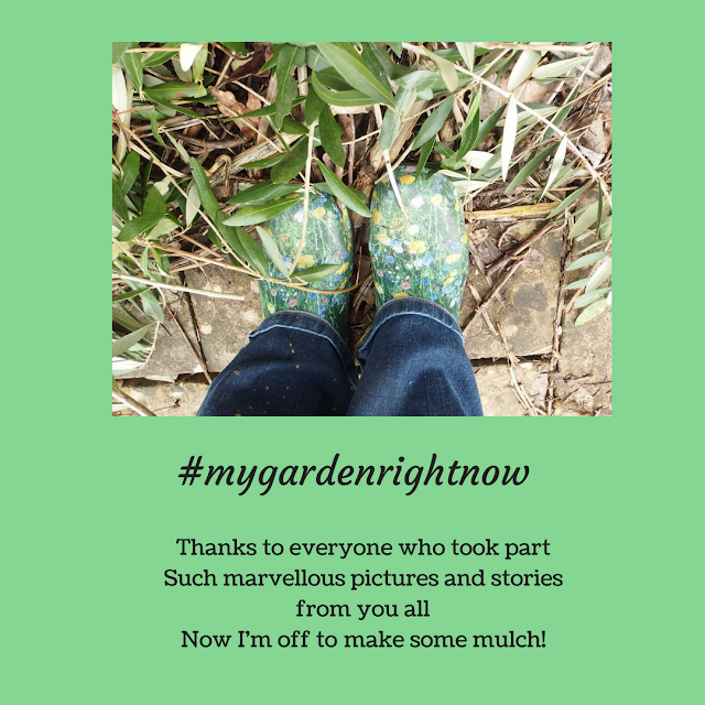 Thanks to everyone who took part in #mygardenrightnow
