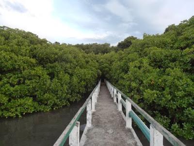 Mangrove Trail Pantai Bama