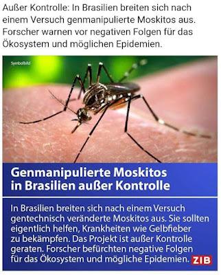 Gentech-Mücken breiten sich jetzt in Brasilien aus