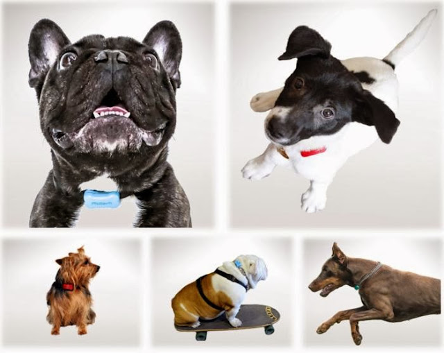 Functional Smartphone Controlled Dog Gadgets (15) 5