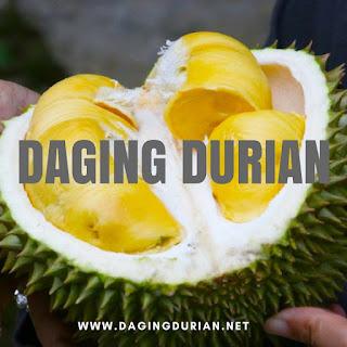 produsen-daging-durian-medan-yang-tiada-duanya-di-natuna