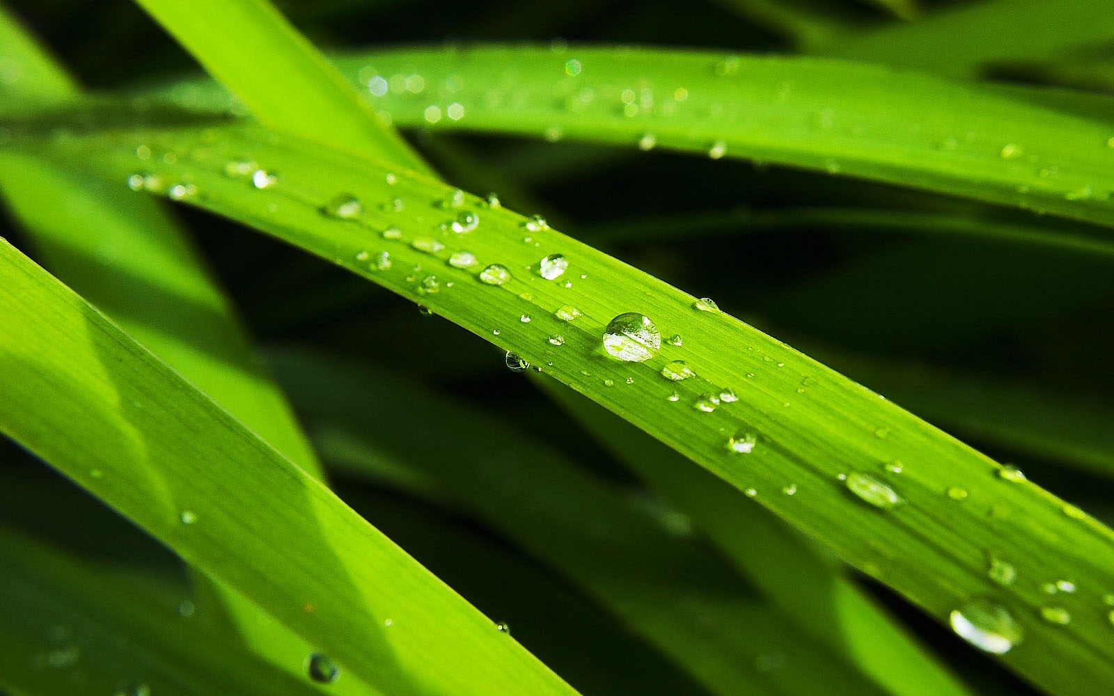 Wallpapers Morning Dew Photographs