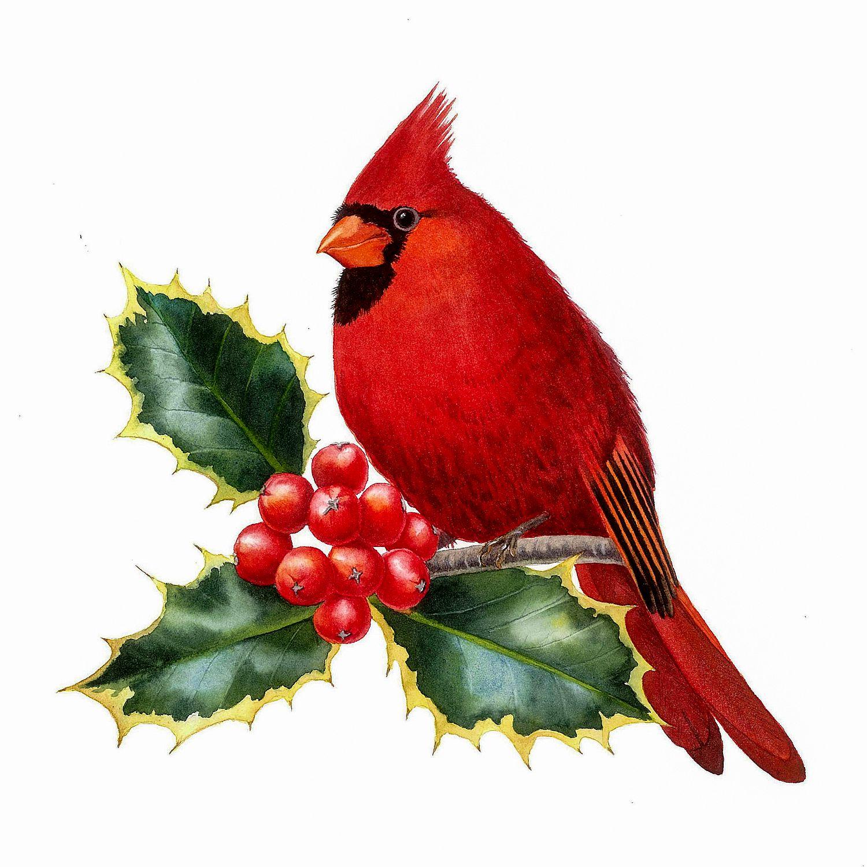 Cardinal Bird Drawing Pencil Drawing Giclee Fine Art Print of  |Cardinal Bird Drawings