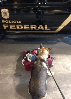 Guajaramirense é preso com 5 kg de pasta base de cocaína no aeroporto de Minas Gerais