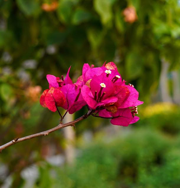 Sourajit Saha Photography 5