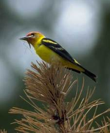 National Audubon Society Invites You to Join the 119th Annual Christmas Bird Count