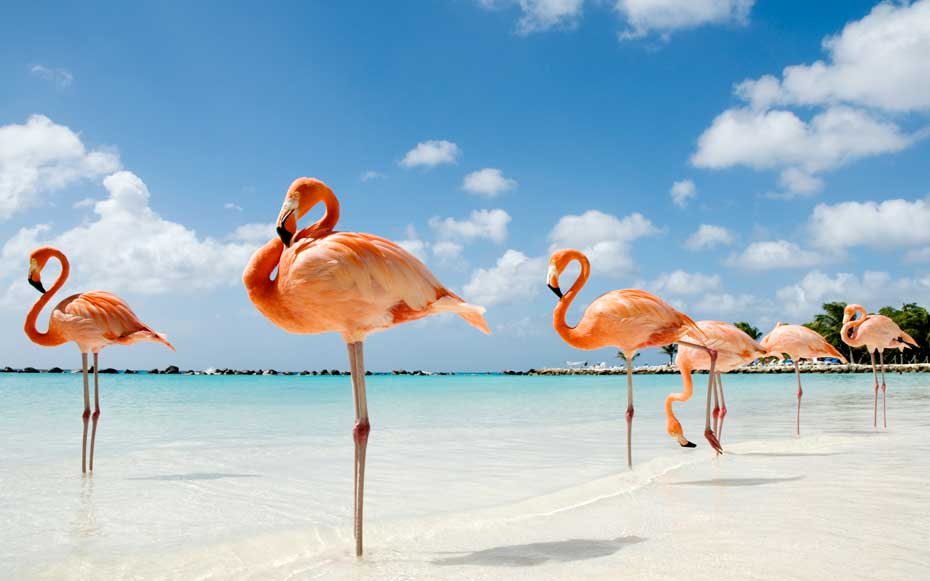best things to do in Aruba