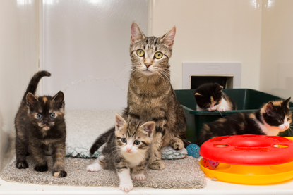 tabby cat and kittens