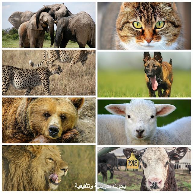 أماكن عيش الحيوانات، أين يعيشون الحيوانات، أسماء اماكن عيش الحيوانات