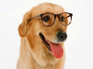 semana dos cachorros