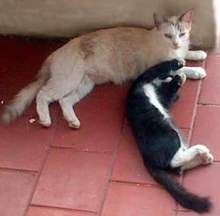 amigos-el-magico-mundo-felino-de-niki