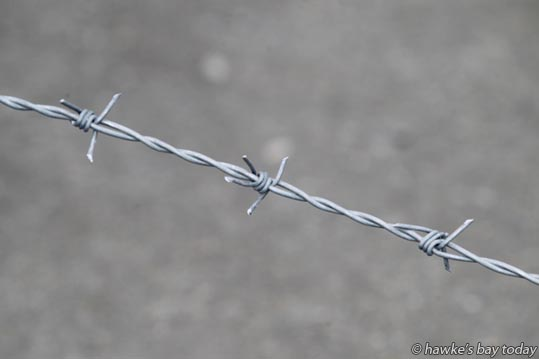 Barbed wire at Tumu ITM, Hastings. photograph