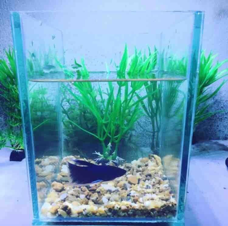 Image Top Choices of Betta Fish Bowl Size