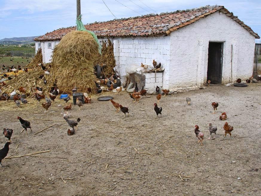 Imparare con la geografia 21 l 39 allevamento e il suo paesaggio for Animali da casa