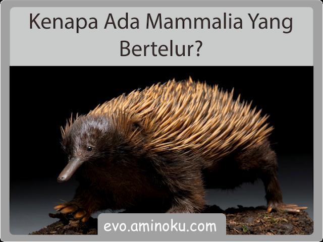 Kenapa ada mamalia yang bertelur?