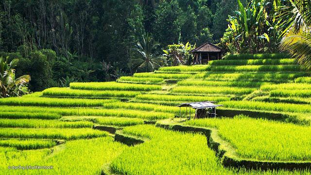 Explore Ubud Bali