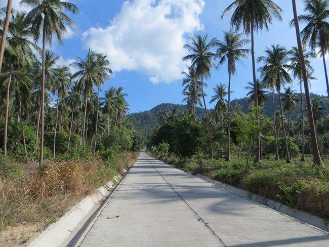 Дорога сквозь пальмы