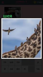 на шее жирафа сидят несколько птиц, другие в полете