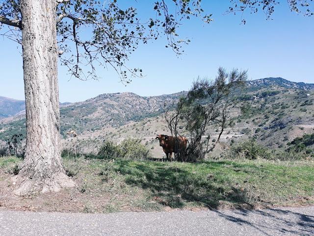 Villaggi Schisina, Mesyna, Sycylia