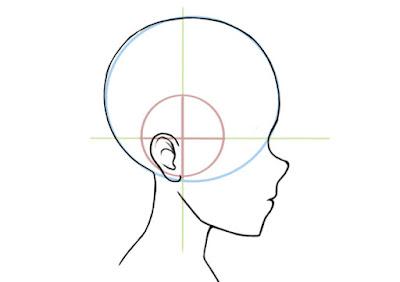 dessiner l'oreille de profil