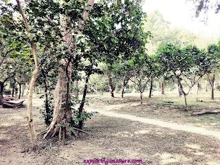 Green Park at Hauz Khash