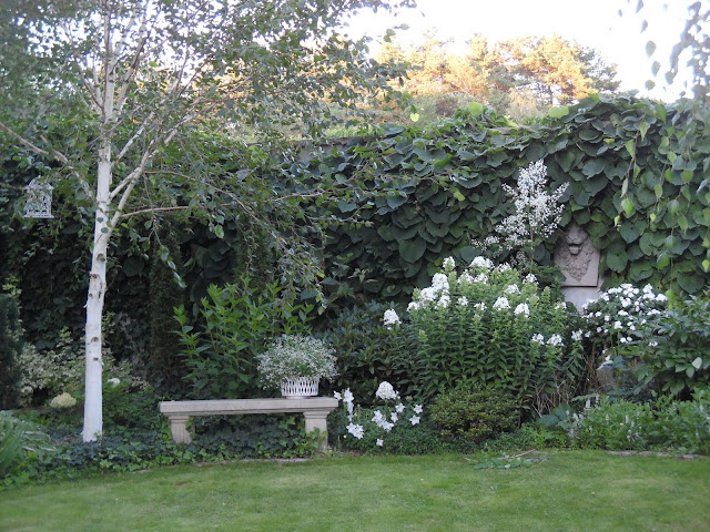brzoza Doorenbos, kamienne ozdoby ogrodowe, białe floksy