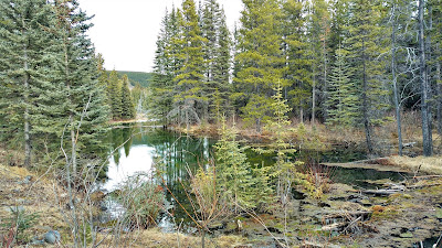 Beaver Flats Interpretive Trail, Elbow Valley
