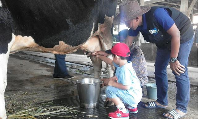 Sentul Fresh Dairy Farm