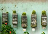 botellas de plastico recicladas para cactus