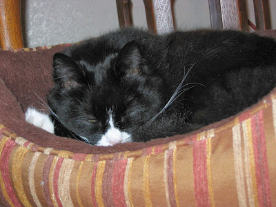 black adult cat bed
