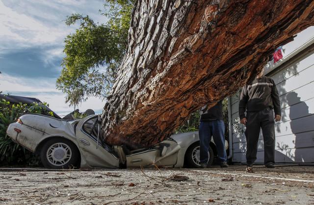 Что делать, если на машину упало дерево или баннер
