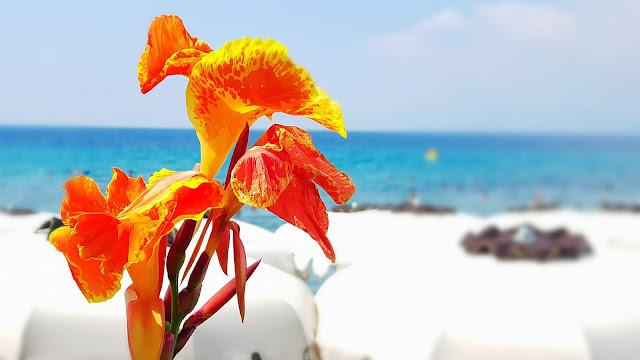 Fiore rosso con sfumature gialle