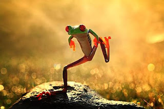 Ministry of Silly Frog Walks