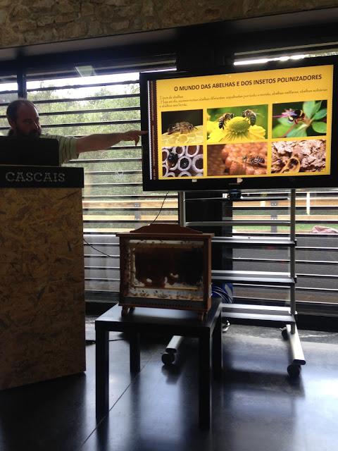 Workshop O Mundo das Abelhas, Festa dos Maios, Quinta do Pisão