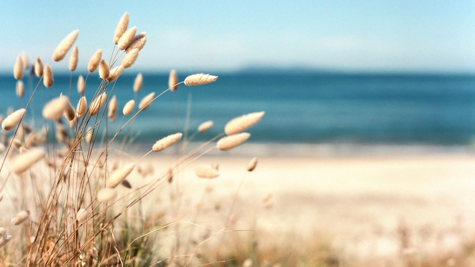 Hình nền máy tính mùa hè, Top 100 hình nền mùa hè full hd