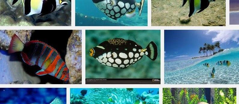 Ikan Hias Aquarium Terindah Di Dunia? Ini Dia Jenis Tercantik dan Terpopuler
