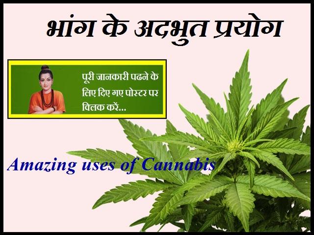 Amazing uses of Cannabis-भांग के अदभुत प्रयोग