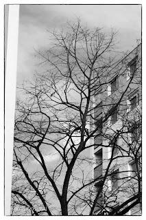Fekete fehér kép egy fáról és háttérben egy panelről