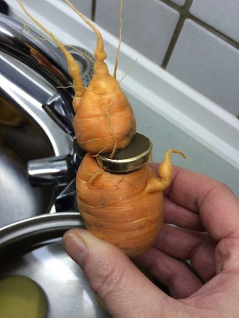 Perdió su anillo de boda ¡y lo halló en una zanahoria!